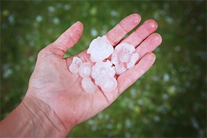 Bigstock Hail In Hands After Hailstorm 240604024 Copy